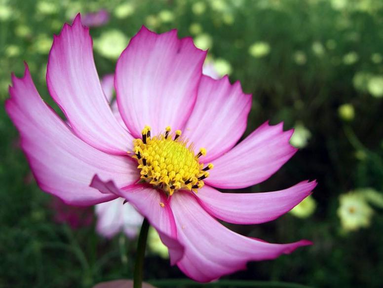 фото оригинальные цветы: